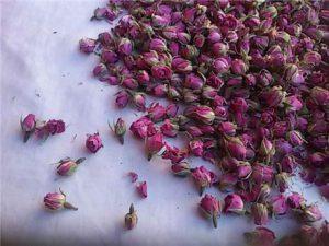 غنچه گل محمدی تازه