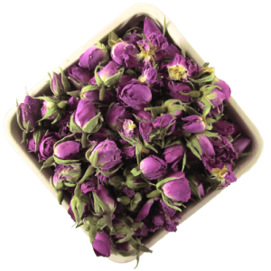 تولید کننده غنچه گل محمدی تازه