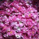 آخرین قیمت غنچه گل محمدی خشک