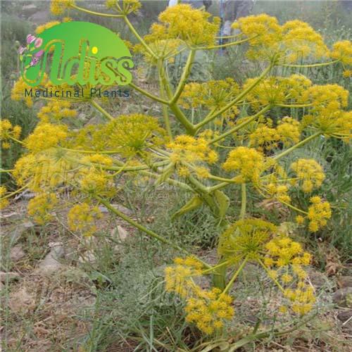 قیمت باریجه گیاهی در ایران